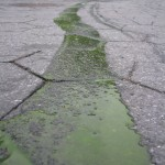 Trail of green slime left behind by garbage carried away