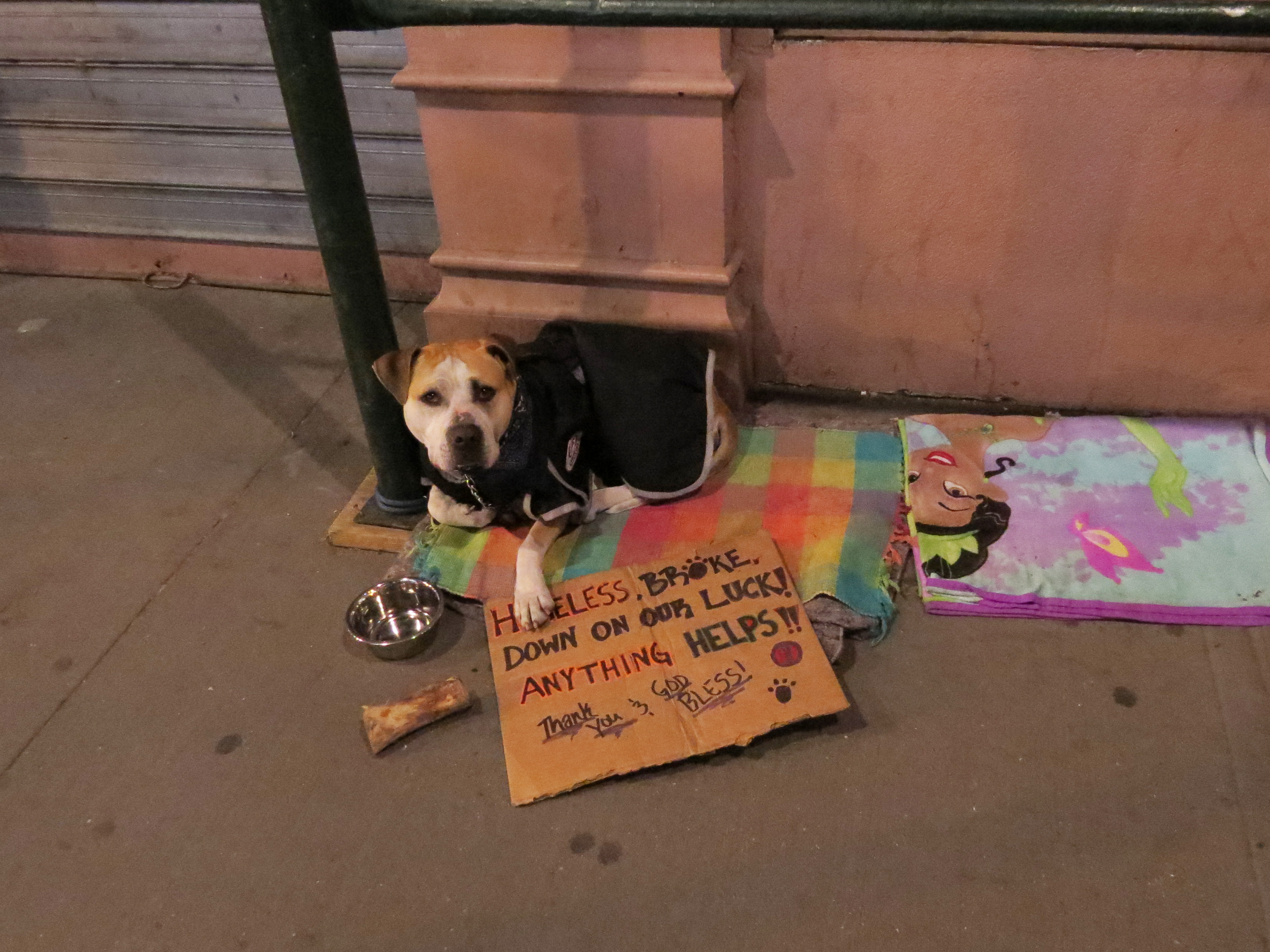 dog with cardboard sign asking for help